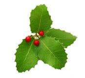 霍莉莓果圣诞节装饰 免版税库存照片