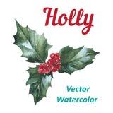 霍莉莓果象圣诞节标志传染媒介 免版税库存照片