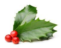 霍莉被隔绝的莓果叶子 免版税库存照片