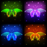 霓虹蝴蝶 库存图片