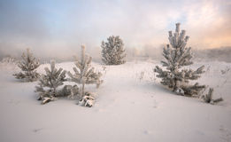 霜包括的云杉 免版税库存图片