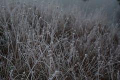 霜包括的植物特写镜头在寒冷早期的秋天早晨 图库摄影