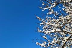 结霜早晨明信片被反射的霜河光亮的雪星期日晴朗的结构树冬天 免版税库存照片