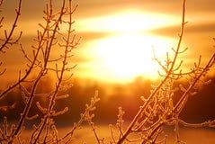 霜湖岸结构树 库存照片