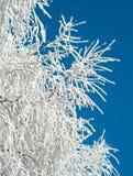 霜灰白结构树冬天 库存照片