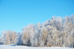 霜的冬天森林 免版税图库摄影