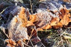 结霜的叶子宏指令在冬天 库存图片