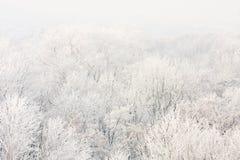 结霜的树在一个晴朗的早晨。 免版税库存图片