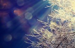 结霜的树枝 免版税库存照片