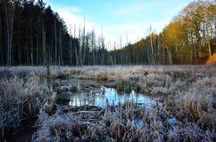 结霜的沼泽地冬天风景 免版税库存照片