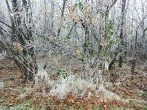 结霜的自然 库存图片