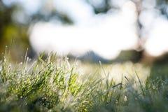 结霜的草特写镜头有模糊的bokeh秋天早晨日出背景 图库摄影