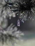 结霜的针 图库摄影