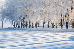 结霜的结构树 库存照片