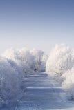 霜空白冻结的河的结构树 免版税图库摄影