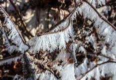霜细节在分支的葡萄树13 免版税库存图片