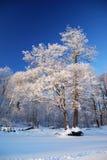 霜结构树 库存图片