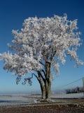 霜结霜的结构树 免版税图库摄影