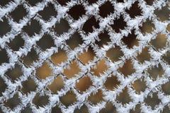 霜美好的结构在净网的 免版税图库摄影