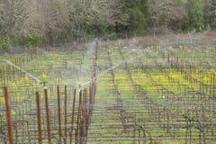 霜冻保护在葡萄园里 免版税库存图片