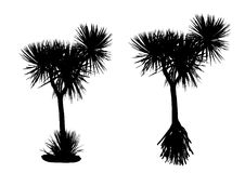 露兜树树剪影 免版税图库摄影