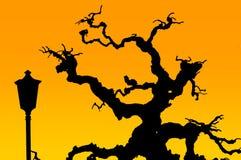 与灯的光秃的树 皇族释放例证