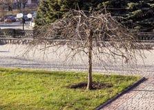露出偏僻的结构树 免版税图库摄影