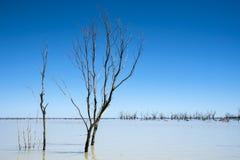露出分支的树反对蓝天在遥控的在内地澳大利亚湖Menindee 免版税库存照片