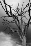 露出分支的结构树 库存照片