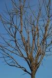 露出分支的结构树 库存图片
