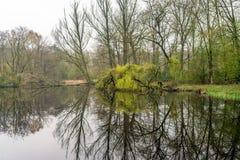 露出和在湖反映的发芽的树 图库摄影