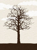 露出孤立结构树 图库摄影