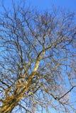 露出结构树 库存图片