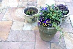 露台植物罐 免版税图库摄影