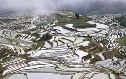 露台的米在原阳,云南,中国调遣 库存照片