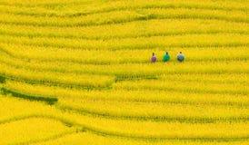 露台的米调遣-三名妇女在Mu Cang柴,安沛市,越南参观他们的米领域 免版税库存照片
