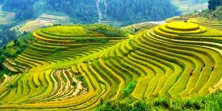 露台的米调遣-三名妇女在Mu Cang柴,安沛市,越南参观他们的米领域 免版税库存图片