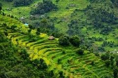 露台的米领域。喜马拉雅山,尼泊尔 库存照片