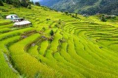 露台的米领域。喜马拉雅山,尼泊尔 免版税库存图片