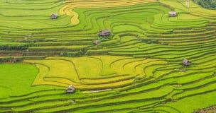 露台的米领域在北越南 库存照片