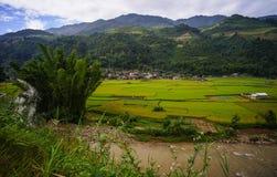 露台的米领域在北越南 免版税库存图片