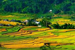 露台的米领域在清早在Mu Cang柴,安沛市省,越南 免版税库存照片