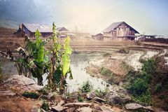 露台的米领域在越南 图库摄影