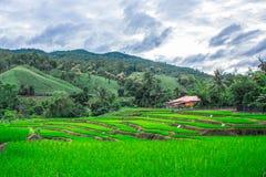 露台的米领域在Maejam, Chiangmai,泰国 库存照片