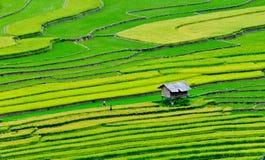 露台的米领域在Mu Cang柴,北越南 库存图片