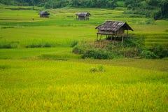 露台的米领域在Mu Cang柴,越南 免版税库存图片