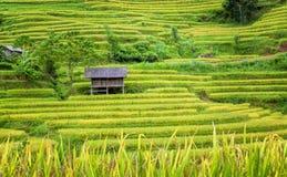 露台的米领域的高跷房子 库存照片