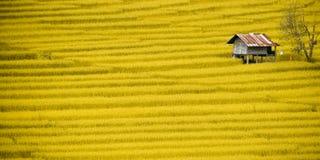 露台的米领域 免版税图库摄影