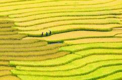 露台的米领域 免版税库存图片