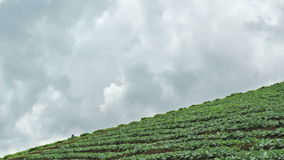 露台的菜领域,泰国时间间隔  免版税图库摄影